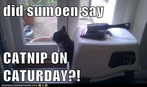 did sumoen say  CATNIP ON CATURDAY?!