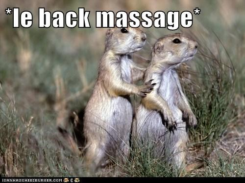 animals back rub Prairie Dogs stress - 5597027584
