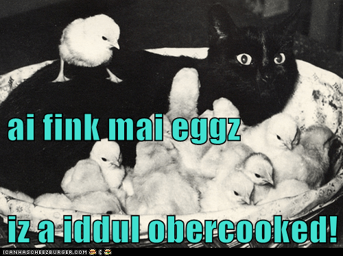 animals Babies breakfast cat chickens chicks eggs food I Can Has Cheezburger oops overcooked uh oh - 5597252864