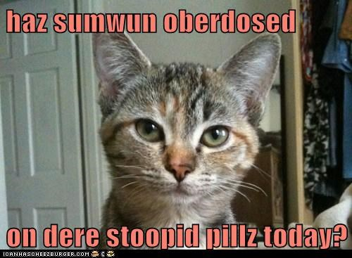 animals,cat,dumb,I Can Has Cheezburger,overdose,stupid,stupid pills