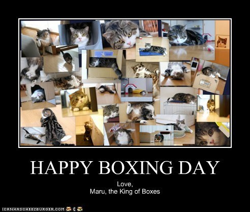 best of the week,boxes,boxing day,caption,captioned,cardboard box,collage,holidays,maru