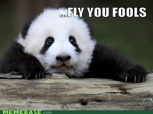 best of week cute gandalf Lord of the Rings Memes panda - 5597430784