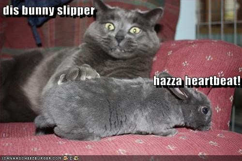 bunny caption captioned cat confused has heartbeat rabbit slipper this - 5597798144