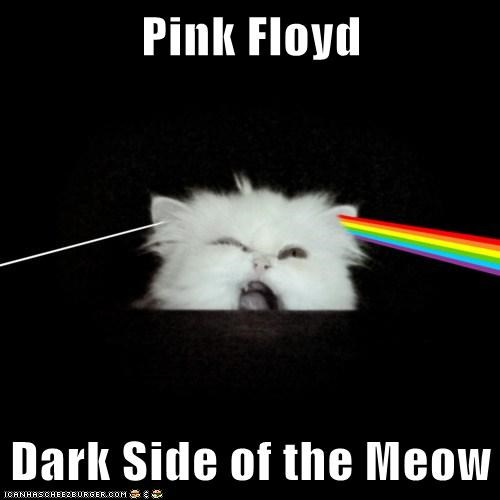 awesome band cat classic rock Dark Side of the Moon I Can Has Cheezburger pink floyd rainbow refraction - 5597870848