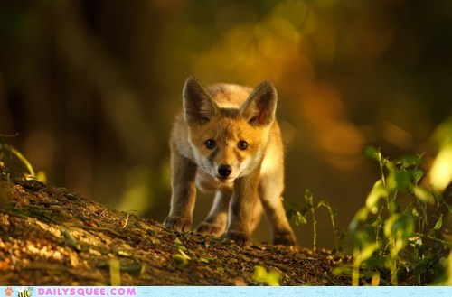 baby entreaty eyes fox invisible irresistible kit stare Staring stealth stealthy - 5597882112