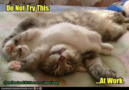 Do Not Try This ...At Work. {Purrfessional kitties on a closed bed}