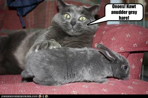 Onoes! Nawt anudder gray hare!