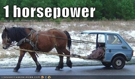 animals horse horse pulling a car horsepower - 5598331648