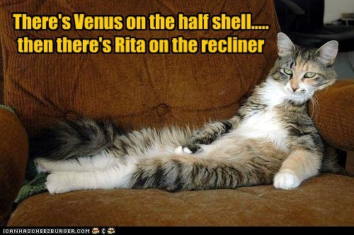art,caption,captioned,cat,half,imitating,imitation,painting,recliner,shell,there,venus,venus on the half shell