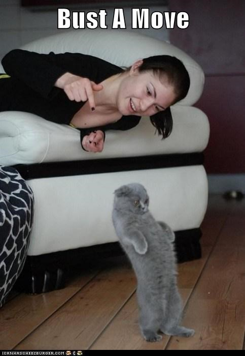 cat dance dancing I Can Has Cheezburger - 5598896640