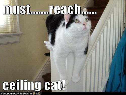 must.......reach......  ceiling cat!