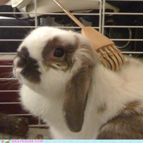 back bunny do want happy bunday rabbit reader squees scratches scratching scritches - 5599214080