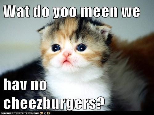 Cheezburger Image 5599477760