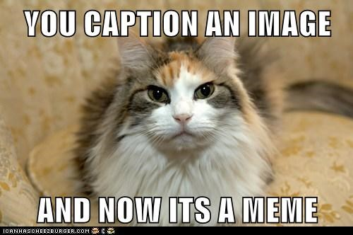 animals caption cat I Can Has Cheezburger instructions meme