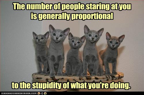 caption,captioned,Cats,lots of cats,math,numbers,proportional,proportions,sayings,Staring,stupid,stupidy,you