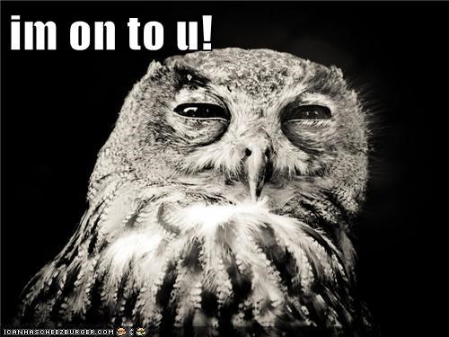 animals birds im-on-to-you im-watching-you Owl - 5599657728