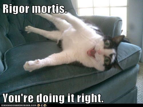 Rigor mortis  You're doing it right  - I Can Has Cheezburger?