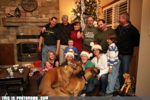 Animal Bomb,animals,best of week,christmas,dogs,rowdy