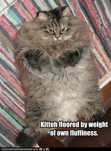Kitteh floored by weight of own fluffiness.
