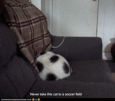 ball best of the week caption captioned cat coloring curled up resemblance sleeping soccer soccer ball spots - 5600534528
