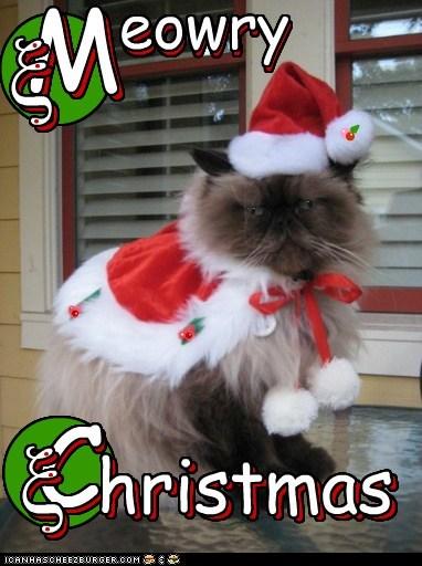 Meowry Christmas...