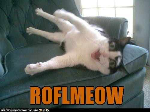 acronyms,best of the week,caption,captioned,Cats,Hall of Fame,laughing,meow,mouth open,portmanteaus,rofl