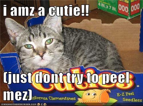 Cheezburger Image 5601424896