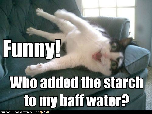 added bath caption captioned cat funny starch stiff stuck water who