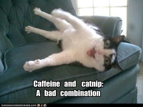 Caffeine and catnip: A bad combination