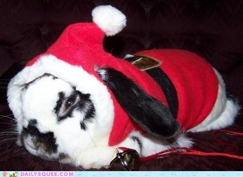 bunny,christmas,costume,dressed up,hat,rabbit,robe,santa