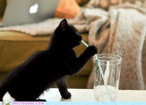 acting like animals cat drink drinking Hall of Fame kitten milkshake quote straw water - 5601970176