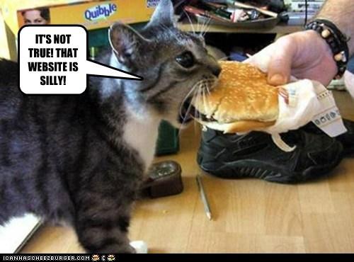 Cheezburger Image 5602295552