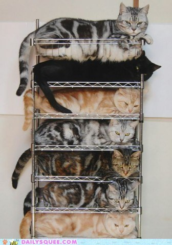 acting like animals cat cataracts Cats literalism prefix pun rack racks stacked suffix - 5602301952