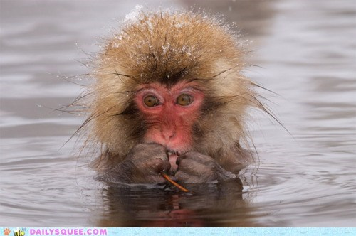 acting like animals,baby,cold,do not want,monkey,request,snow monkey,water
