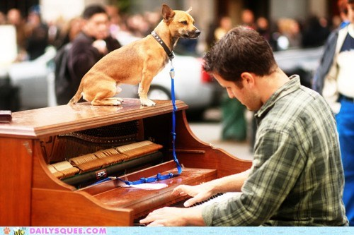 acting like animals bored dogs explanation piano standing top trick works every time