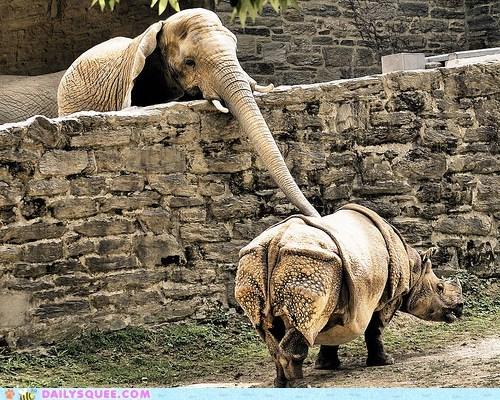 acting like animals elephant examining heart location reaching rhino rhinoceros touching trunk - 5602343168
