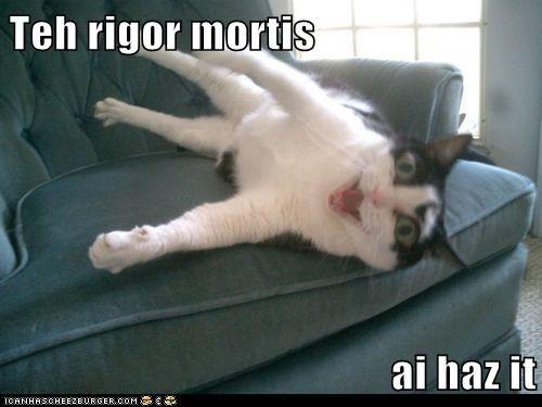 cat I Can Has Cheezburger i has it shocked whoa - 5602527488