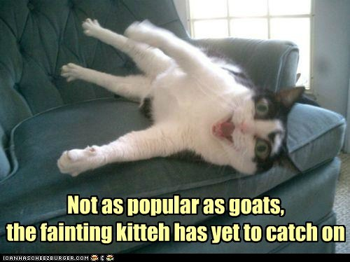 Not as popular as goats, the fainting kitteh has yet to catch on