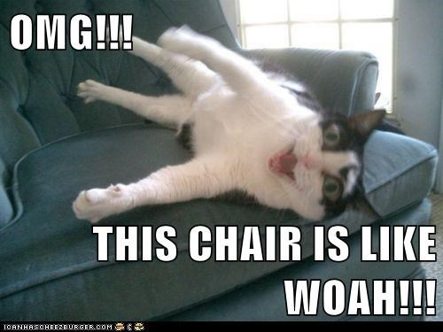 animals awesome cat chair I Can Has Cheezburger shocked whoa - 5602657024