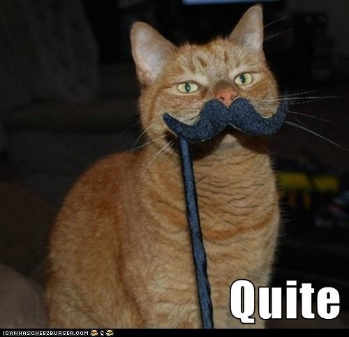 animals cat I Can Has Cheezburger mustache quite - 5602760960