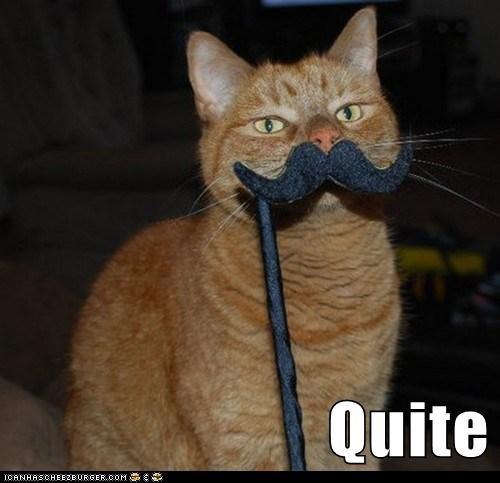 animals cat I Can Has Cheezburger mustache quite - 5602760960