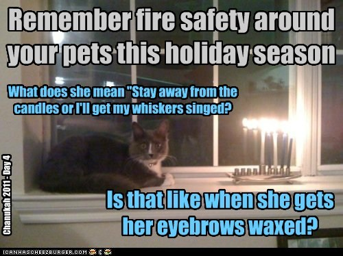 "Remember fire safety around your pets this holiday season What does she mean ""Stay away from the candles or I'll get my whiskers singed? Is that like when she gets her eyebrows waxed? Chanukah 2011 - Day 4"