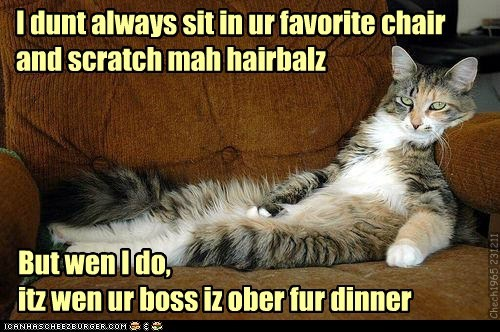 I dunt always sit in ur favorite chair and scratch mah hairbalz But wen I do, itz wen ur boss iz ober fur dinner Chech1965 231211
