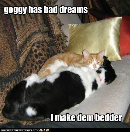 bad dreams,best of the week,cat,dogs,friends,friendship,hug,hugs,i has a hotdog,nightmare