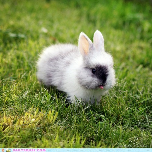 adorable baby bunny Hall of Fame happy bunday honored insult insulting rabbit sticking out tiny tongue - 5605110016
