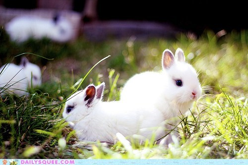 bunnies bunny field filled full happy bunday I want to go to there meadow rabbit rabbits - 5605137152