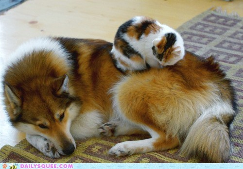 cat,colors,dogs,friends,friendship,fur,Interspecies Love,matching,patterns,sleeping