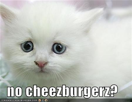 Cheezburger Image 560545024