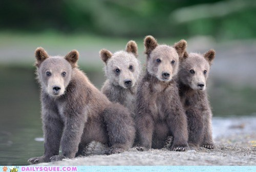 Babies,baby,barbershop quartet,bear,bears,cub,cubs,friends,friendship,pun,singing,song