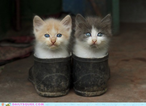 Antonio Banderas boot boots cat Cats fitting kitten Movie reference tiny voiceover - 5605780480